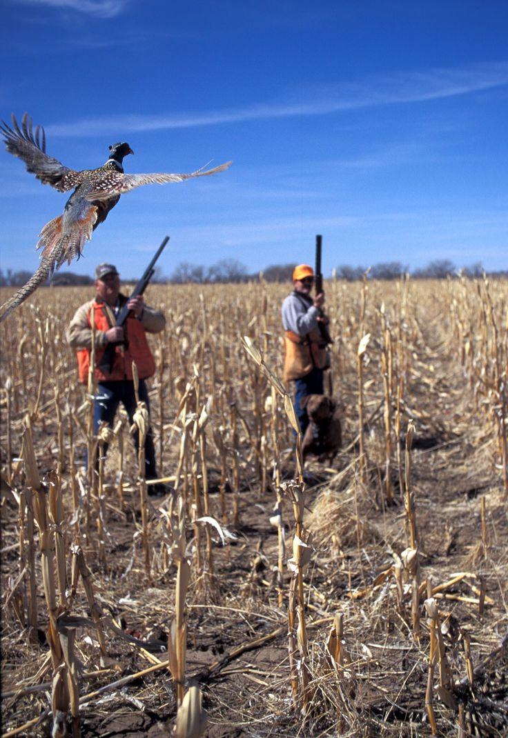 Pheasant Hunting #pheasanthunting