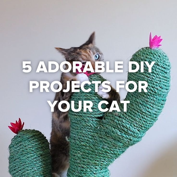 5 Adorable DIY Projects For Your Cat #pet #DIY #cat