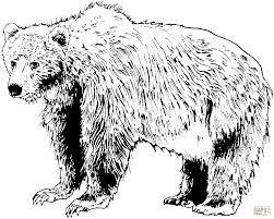 Afbeeldingsresultaat voor kleurplaten amerikaanse zwarte beer