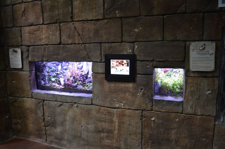 living-planet-public-aquarium-LED-lighting (22)