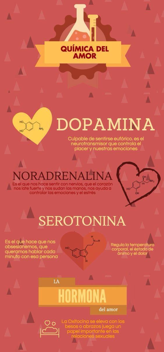 Neuropsicología: La química del amor. Curamos contenido de un post de nuestro blog. Pincha para ver más.