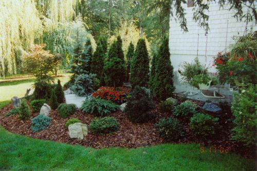 Landscaping around a small patio with emerald green for Green landscape design