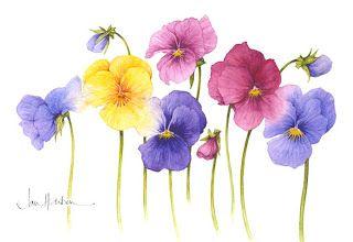 Коллекция картинок: Художник Jan Harbon Цветы