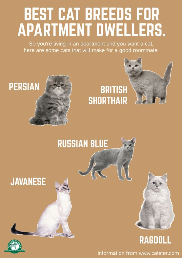Best cat breeds for apartment dwellers. #Cats # ...