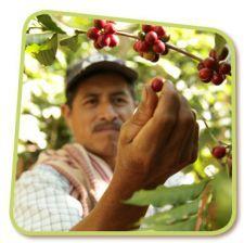 Koffie van eerlijke handel