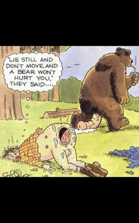 Bear safety 101