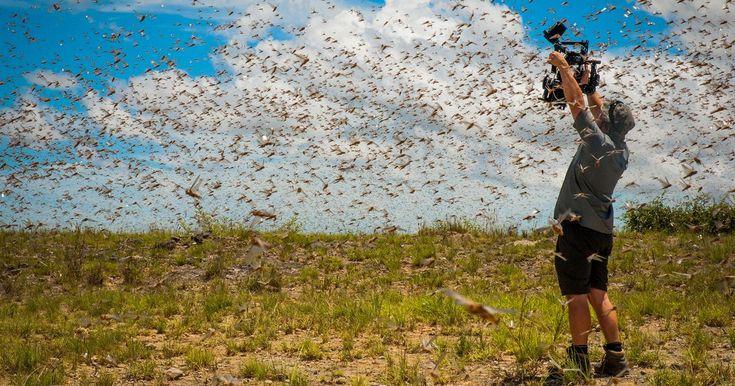 The secrets of David Attenborough's TV wildlife sensation Planet Earth II