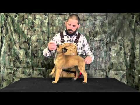 Malinois puppy training tips!