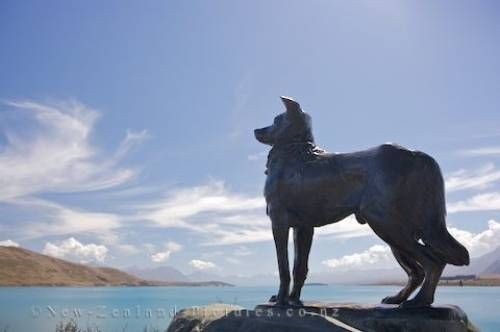 Picture of Photo of a large sheepdog statue overlooking Lake Tekapo in Canterbury on the South Island of New Zealand.