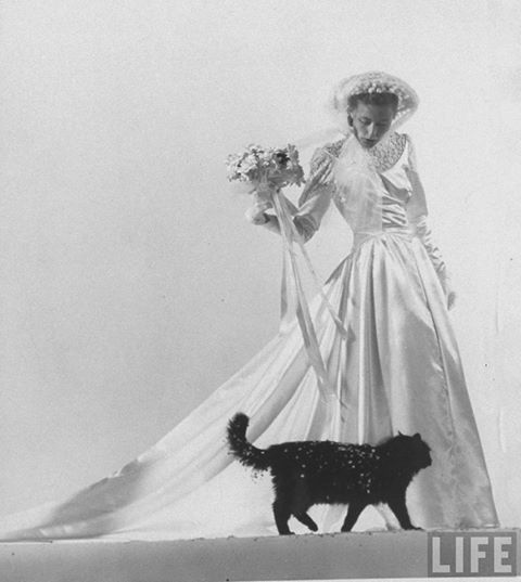 Blackie, Gjon Mili's cat, as part of a fashion shot with bride model. 1945, New York