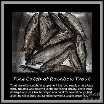 Barbara Griffin - Fine Catch of Rainbow Trout