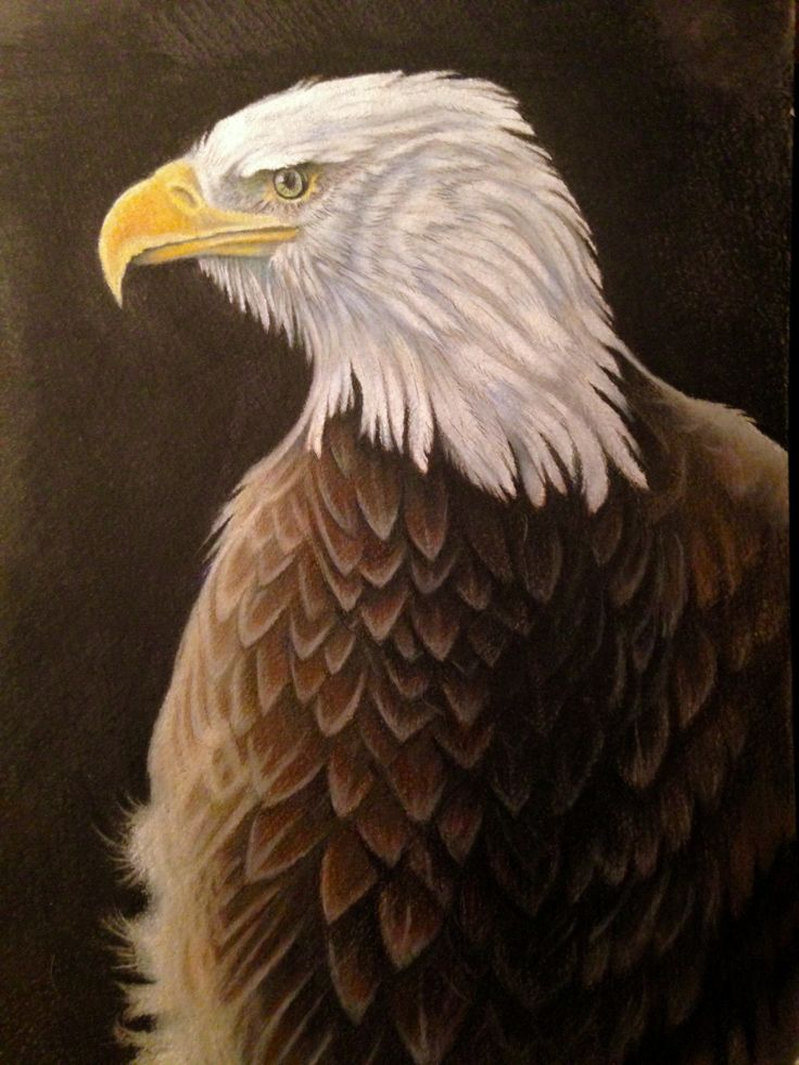 Updated Bald Eagle portrait , 8x10 . Thanks to Ben Williams for the lovely reference photo ! Luminance pencils
