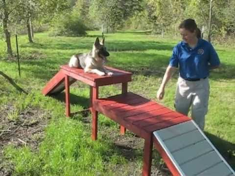 MTC Puppy Confidence Course - YouTube