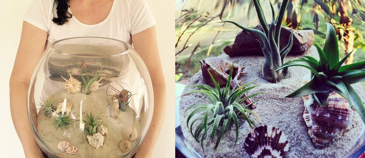 The Planter Pod: Air plant terrariums