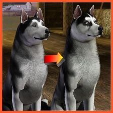 An improved siberian husky for a Sims 3 pets download.