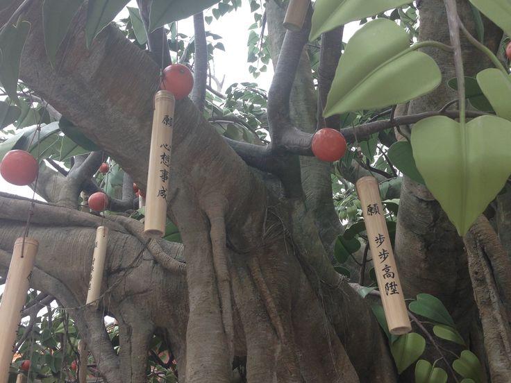 The wishing tree... Lantau