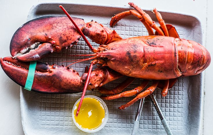 14 Maine-Inspired Recipes for Lobster, Chowder, Blueberries and More - Bon Appétit