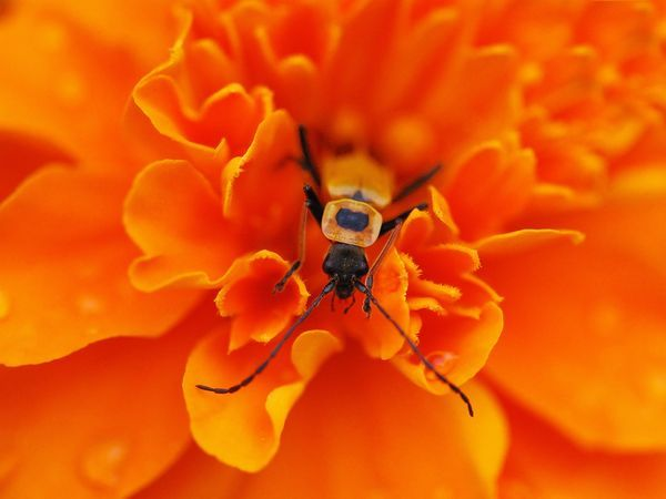10 Amazing Macro Pictures That Will Make You Fall In Love With Nature