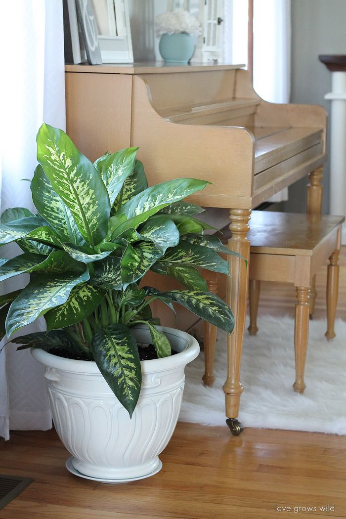 152 best Interior Design Plants images on Pinterest Plants