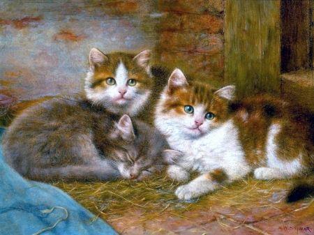 Kittens - Cats Wallpaper ID 1991778 - Desktop Nexus Animals