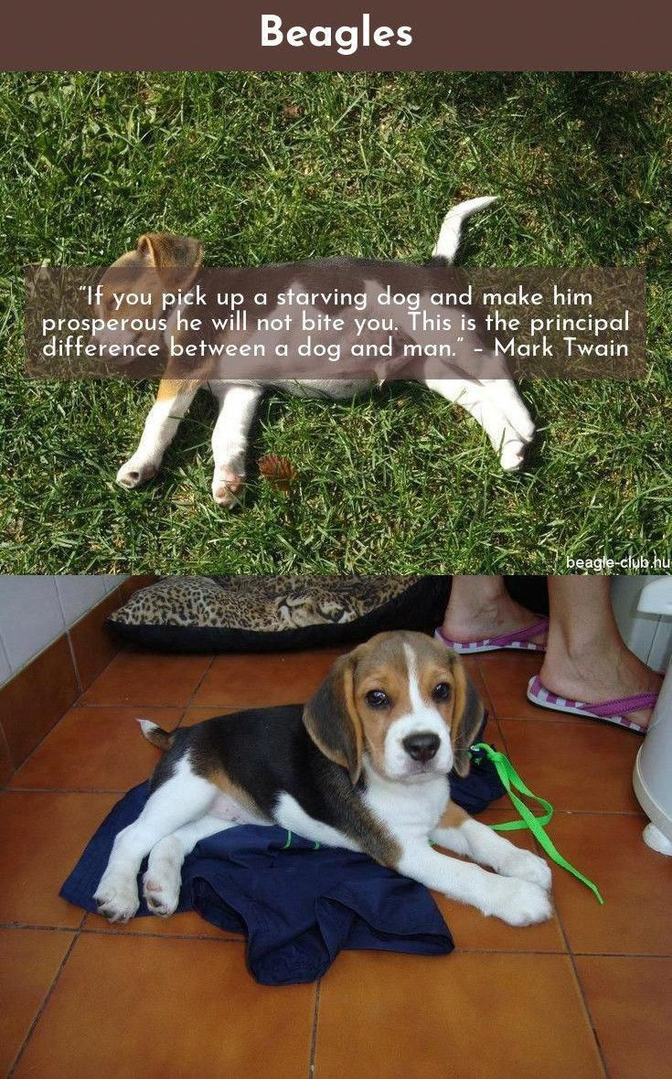 Pin By Dog Boutique Blog On Dogs Training Your Dog Dogs Beagle