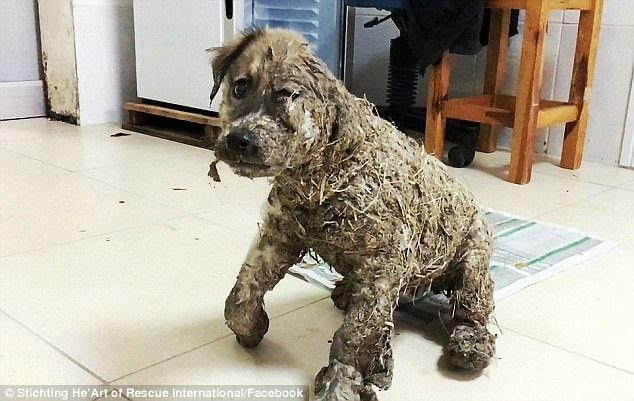 Удивительное преображение щенка
