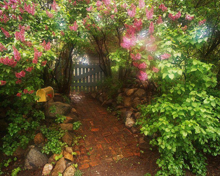 secret-garden-gate-drawing-40 | Garden gates | Pinterest ...