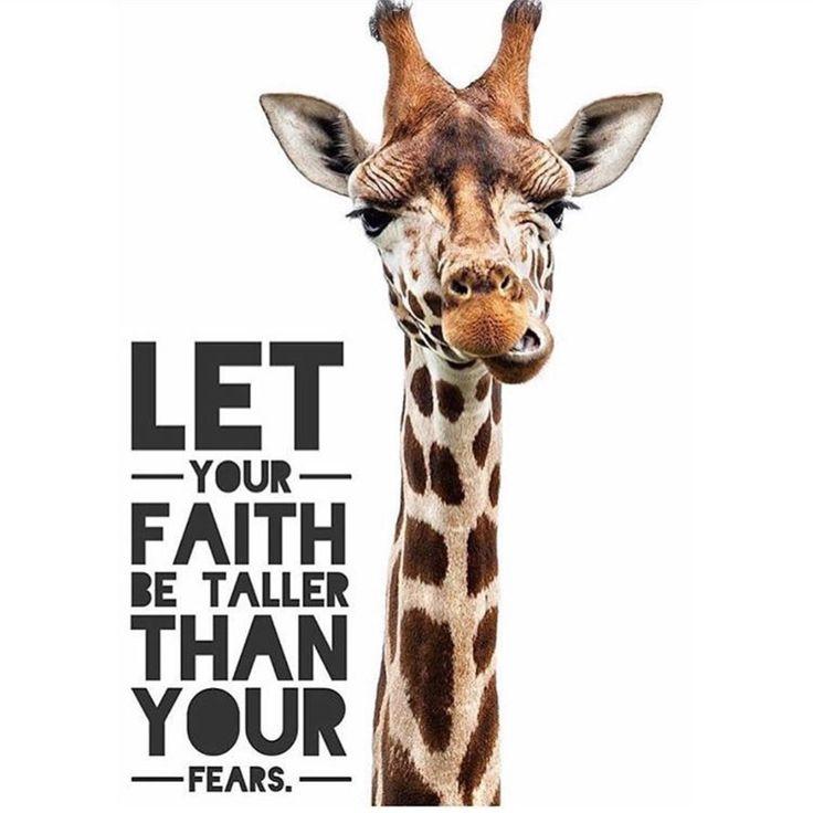 Faith Taller                                                                                                                                                                                 More