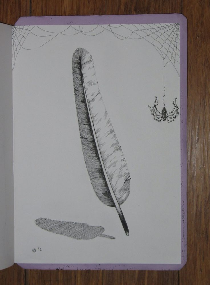 Feather & Web doodle