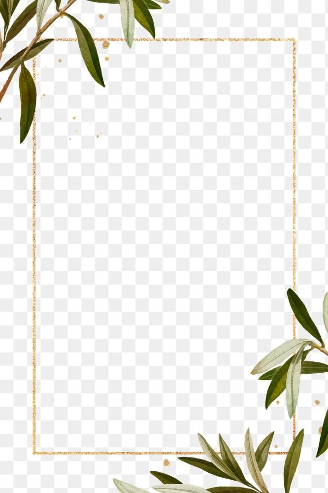 Olive Branches Frame Png Hand Drawn Border Design Space Free Image By Rawpixel Com Ningzk V Logo Design Tutorial How To Draw Hands Hand Drawn Border