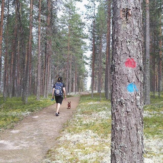 Pyydä kartta hotellin vastaanotosta ja seuraa merkittyjä reittejä. Tervetuloa omatoimiretkeilemään Rokualle! Meiltä mös ohjattuja vaelluksia ryhmille  Get a map from hotel reception and follow marked trails. Also guided hiking and excursions. #rokua #rokuageopark #visitrokua #rokuahealthspa #vaellus #patikointi #retkeily #vaellusreitti #reitti #omatoiminen #retki #hiking #treking #finland #spahotel #finnishnature #hike #trek #visitfinland