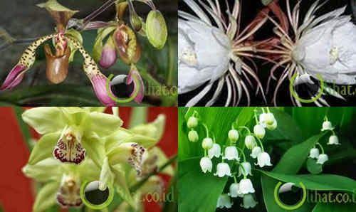5 Bunga Termahal di Dunia
