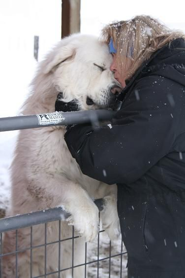 Love your Great Pyrenees :)