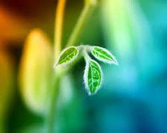 De intelligentie van planten en hoe ze met elkaar communiceren Wetenschapper J.C. Cahill laat ons het geheime leven van planten zien gefilmd van de woestijn tot de regenachtige woudgebieden in Canada. Planten blijken waar te nemen, elkaar te beluisteren, ze 'spreken' met bondgenoten, roepen insecten te hulp en zorgen voor hun zaden en jonge plantjes.