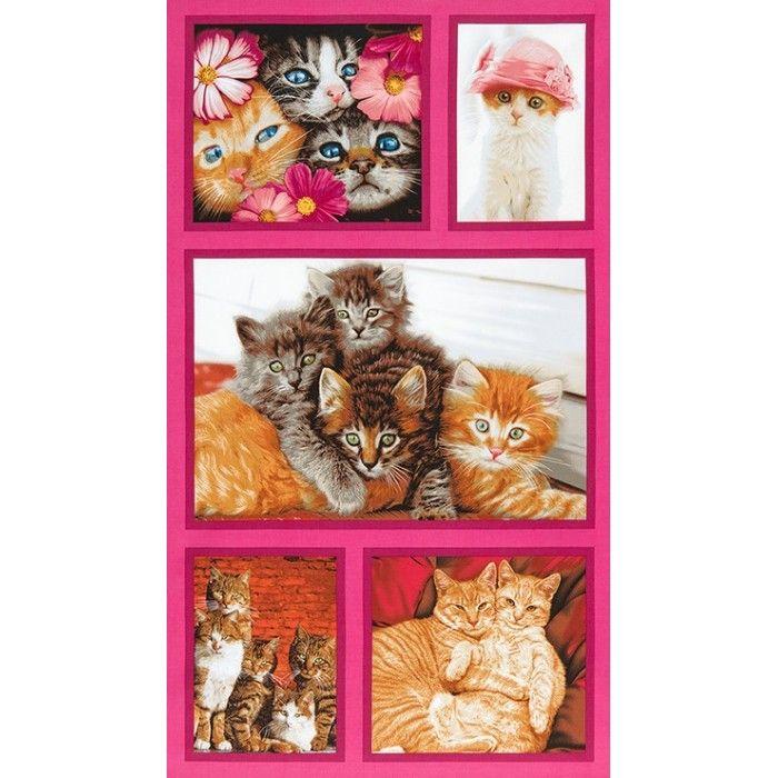 Panel bláznivé kočky