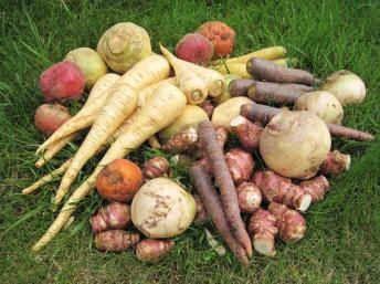 Les légumes anciens ou légumes oubliés