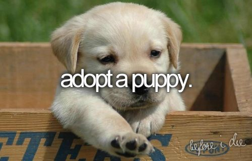 someday.High Five, Little Puppies, Dogs, Pets, Boxes, Baby Animal, Labs Puppies, Baby Puppies, Golden Retriever