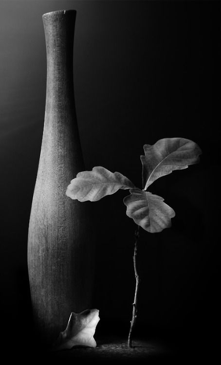 38 best Painting - black and white still life images on Pinterest ...