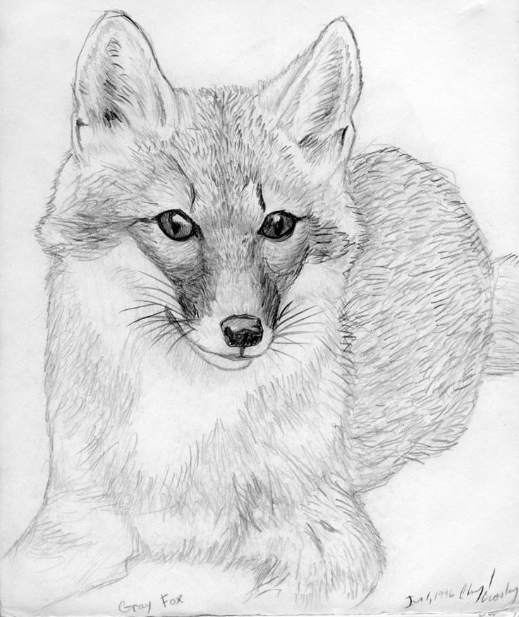 It is a picture of Invaluable Fox Pencil Drawing