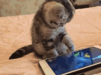 Kitty's new app ......