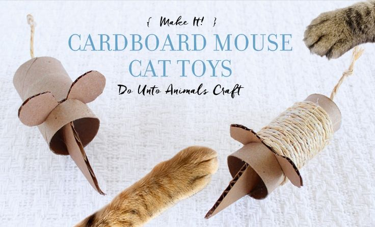 how to make toys for pet mouse