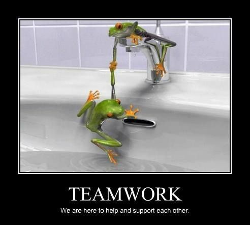 Yay Teamwork Frog Wallpaper Funny Frogs Frog