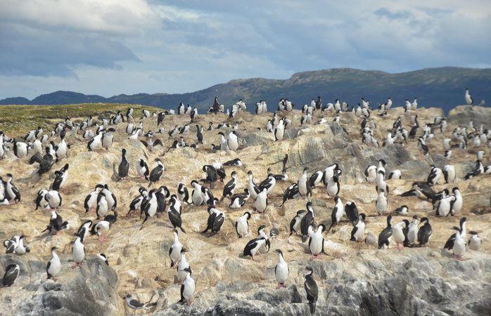"""Pinguins tomam conta de Ushuaia, a """"Cidade do Fim do Mundo"""", na Argentina © caochopp #Argentina #momondo"""