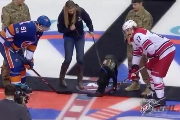 A military service dog named Charlie dropped the puck Thursday before the Carolina Hurricanes and New York Islanders game.