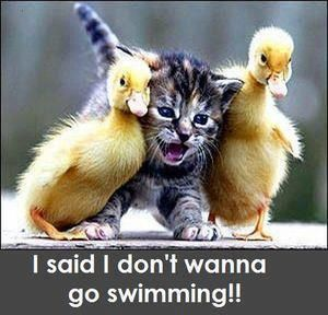 Oh My Freaking Stars!: I don't wanna....Animal Pics, The Aristocats, Best Friends, Baby Ducks, Baby Animal, Funny Stuff, Kittens, Funny Animal, Kitty