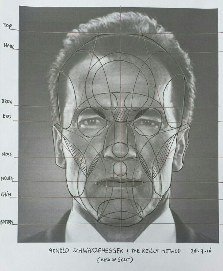 Reilly method practise with a photo of Arnold Schwarzenegger. #reillymethod #head #proportion #face #arnold #schwarzenegger #markdegroot