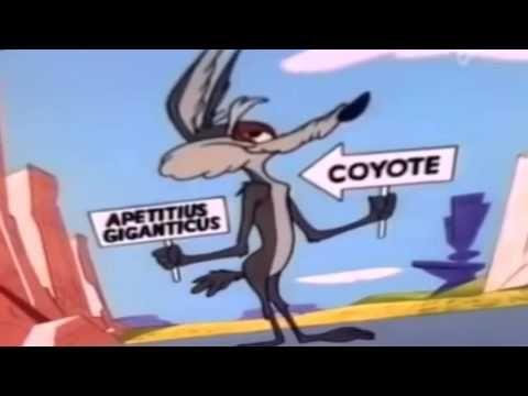 bip bip le coyote youtube