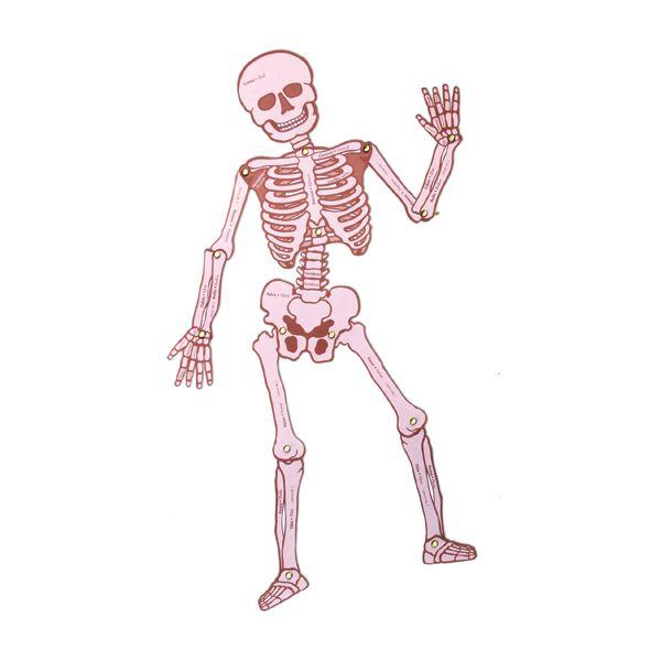 Esqueleto Articulado -> http://www.masterwise.cl/productos/6-ciencias/17-esqueleto-articulado