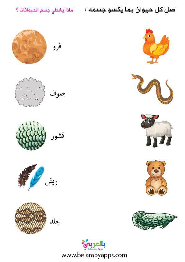 انشطة وحدة الحيوانات لرياض الاطفال اوراق عمل عن الحيوانات للاطفال بالعربي نتعلم In 2021 Arabic Alphabet For Kids Arabic Kids Alphabet For Kids