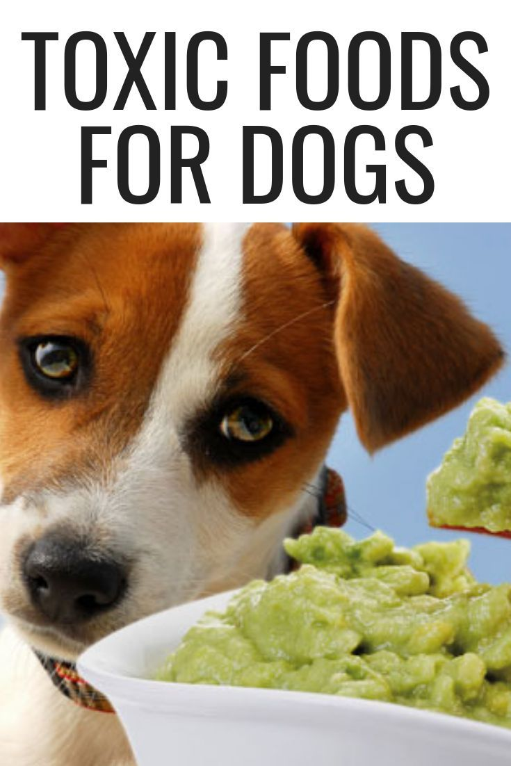 Toxic Foods For Dogs Natural Dog Food Dog Friendly Food Dog